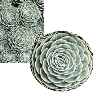 Nordic Modern Posters And Prints Wall Art Canvas Painting Green Wall Succulent Pictures For Living Room Wall Decoration No Frame - SallyHomey Life's Beautiful
