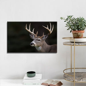 Modern Animals Posters and Prints Wall Art Canvas Painting Deer Pictures - SallyHomey Life's Beautiful