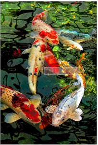 5d Diamond Painting Koi Fish Graph DIY 3D Diamond Embroidery sale full square round drill Mosaic diamond picture animal wall art - SallyHomey Life's Beautiful