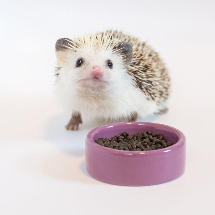 How are Hedgehog Precision diets processed?