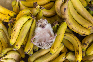 How your hedgehog combats food waste