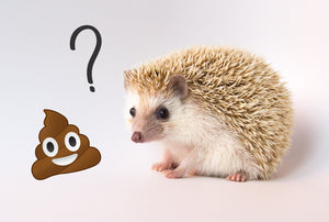 Hedgehogs and Salmonella - CDC Call 11/19/20