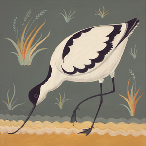 A is for Avocet Catriona Hall print