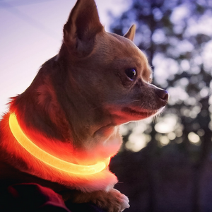 RUBY RED | LED Cat Collar