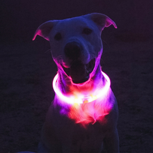 LED Dog Collar Pink USB Rechargeable