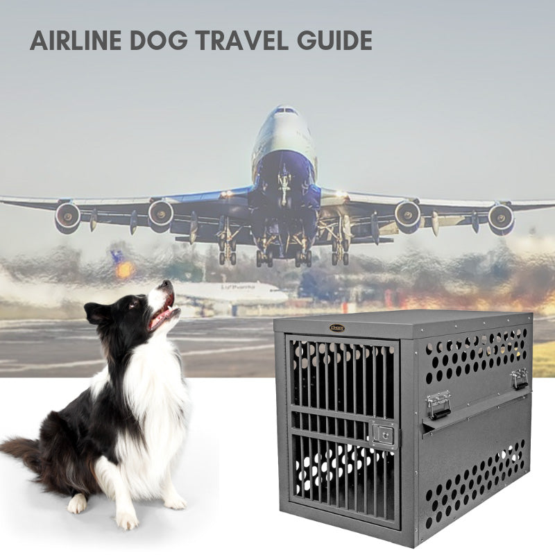 Complete Guide to Airline Compliant Dog Travel IATA CR82