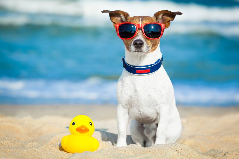 Keep Your Dog Safe and Cool in the Heat