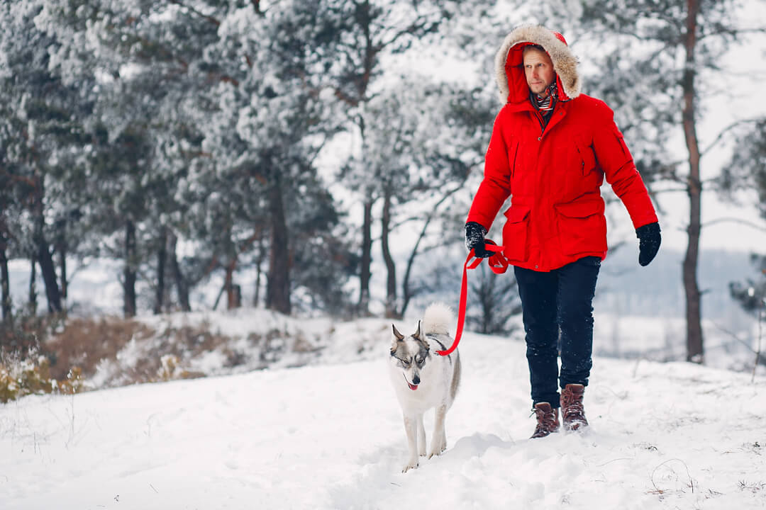 How Cold is Safe for Your Dog?