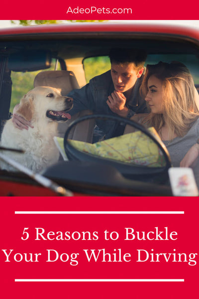 5 Reasons to Buckle Your Dog While Driving