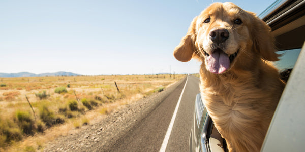 AdeoPets_how_to_travel_safely_with_your_dog_image