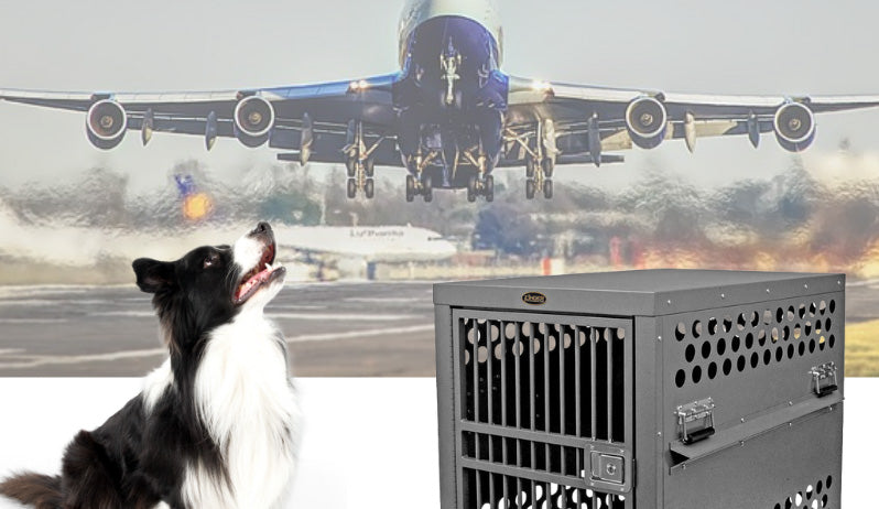 Airline Dog Travel Explained