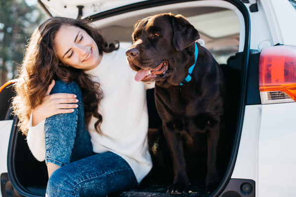 How to travel safely in your car with a large dog