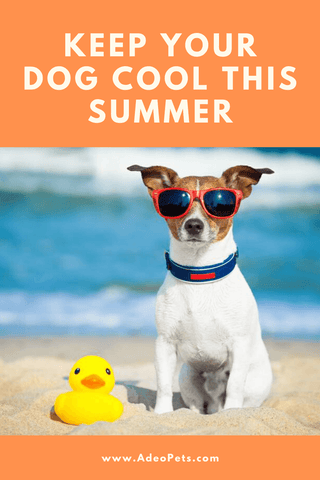 Top tips to keep your dog safe and cool this summer