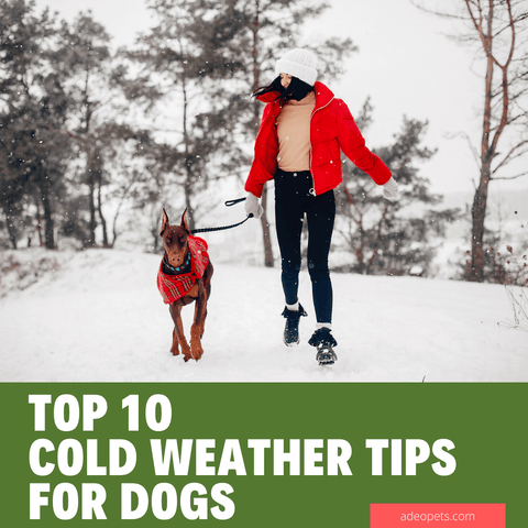 top 10 tips for dogs in cold weather