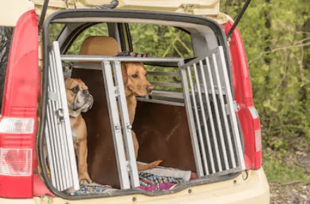 how to crate train a dog for cars