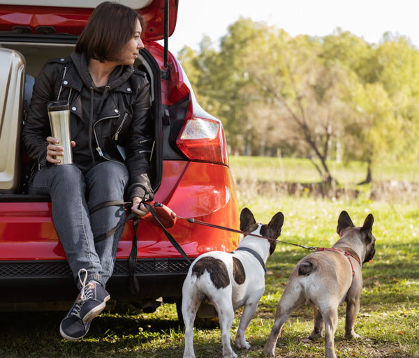how to get out of the car safely with your dog