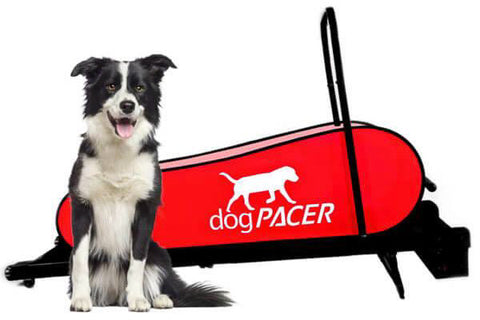 Dog treadmills and treadwheels for indoor dog exercise