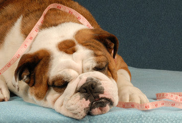 Dog Blog - Dog Obesity treatments and prevention
