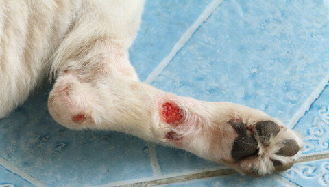 Dog wound care and prevention