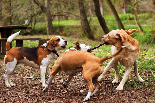what to know before you go to a dog park