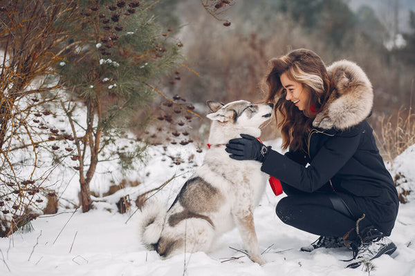 10 tips for your dog to stay safe and warm in the winter