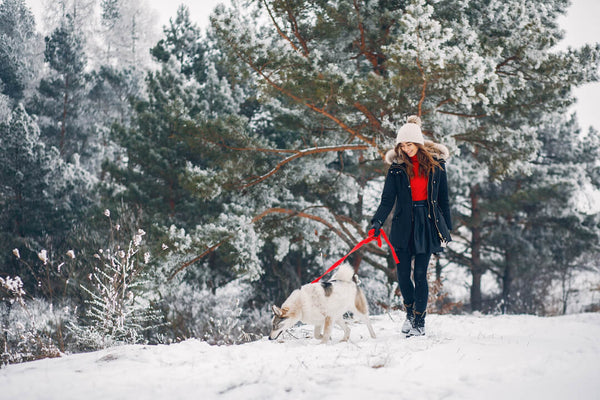 10 tips for your dog in cold weather and snow
