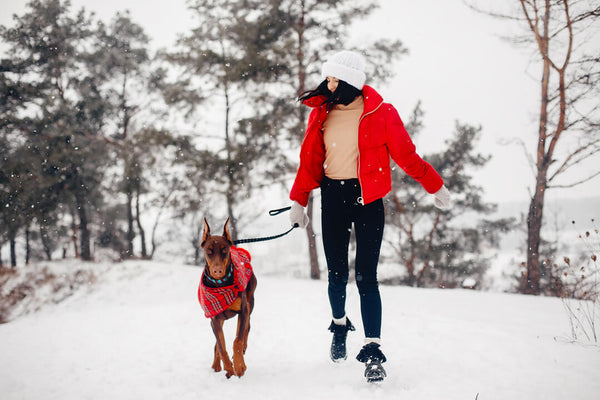 10 cold weather tips for your dog