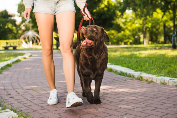 prepare your dog for a visit to the dog park