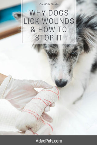 Why do dogs lick their wounds and how how to stop it