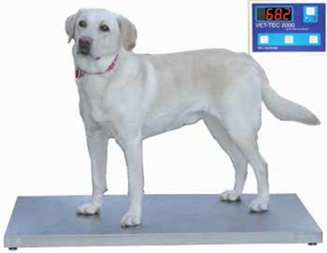 "Petlift Walk-On 42"" Digital Weight Scale"