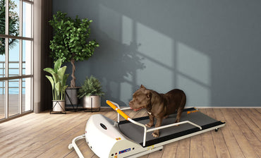 GoPet PetRun RP720F Treadmill for Large Dogs up to 132 lbs