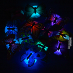 10pc Butterfly LED Lights and 3D House Decoration