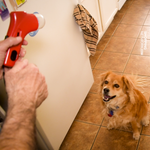 Pet Treat Launcher, Interactive Feeder, and Training Tool for Dogs and Cats