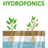 The Pros and Cons Of Hydroponics