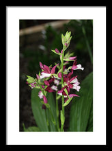 Load image into Gallery viewer, Nun Orchid - Framed Print
