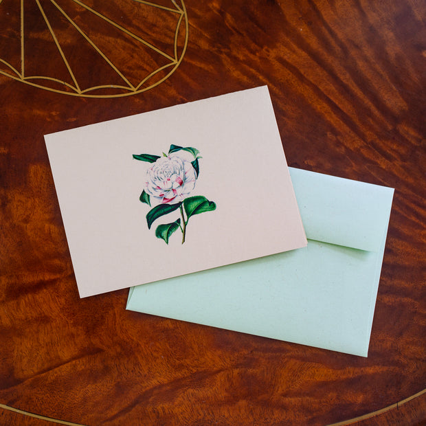 Countess of Orkney Camellia Notecard 1