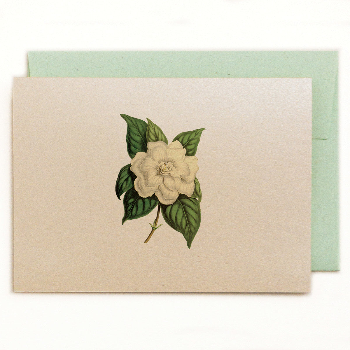 Lilybranch's Gardenia Notecard with green ledger recycled envelope