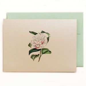 Countess of Orkney Camellia Notecard