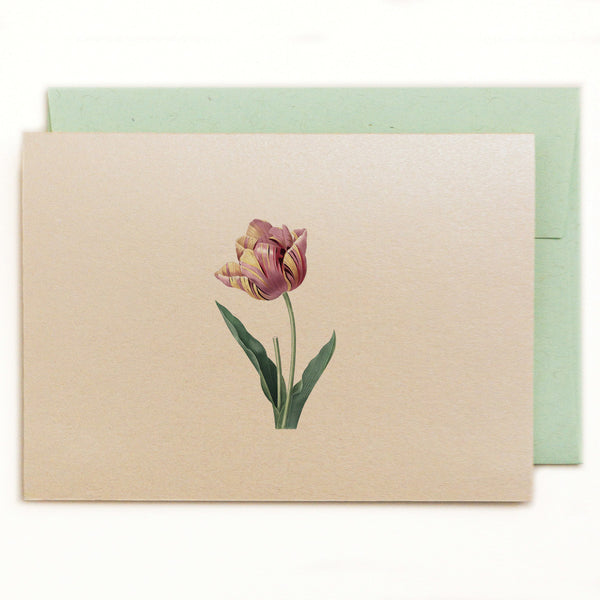 Deep dusty rose and ivory variegated single tulip on a metallic autumn hay notecard with recycled kraft green envelope.