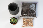 "Load image into Gallery viewer, ""Eastown"" DIY Planting Kit"