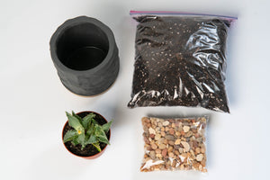 """Eastown"" DIY Planting Kit"
