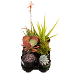 Load image into Gallery viewer, LARGE ASSORTED SUCCULENTS - 6 INCH (Quantities Starting at 6)