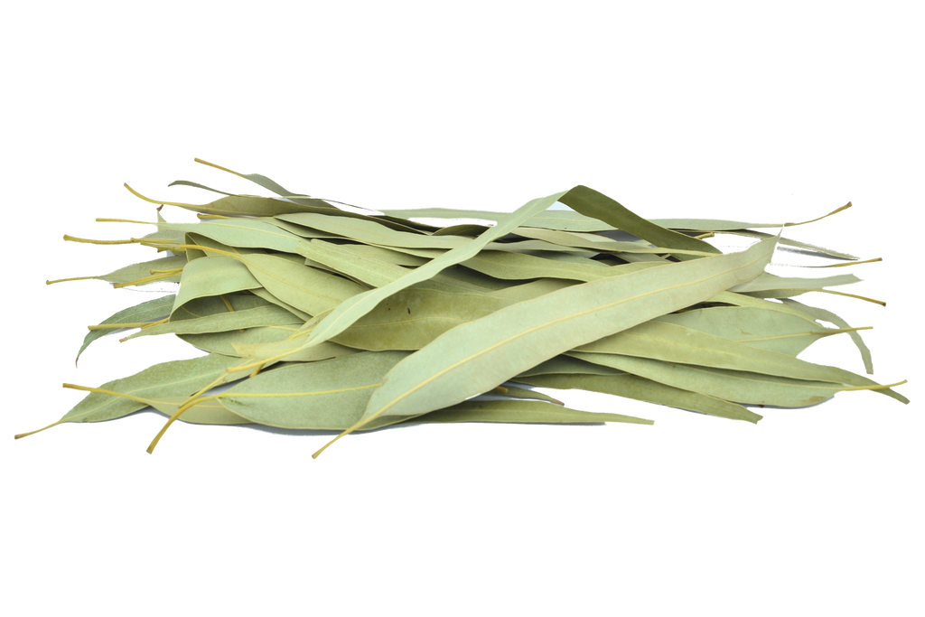 Organic Eucalyptus Leaves