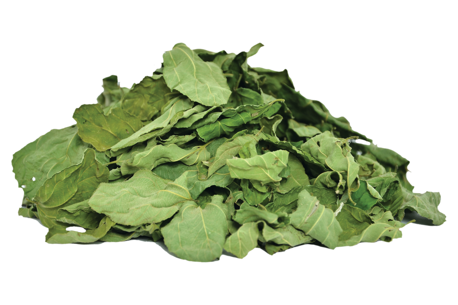 Organic Ziziphus-Spina Leaves Online | Cultivator Natural Products