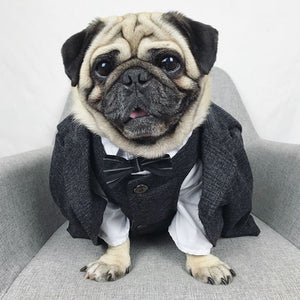 Formal Dog Suit
