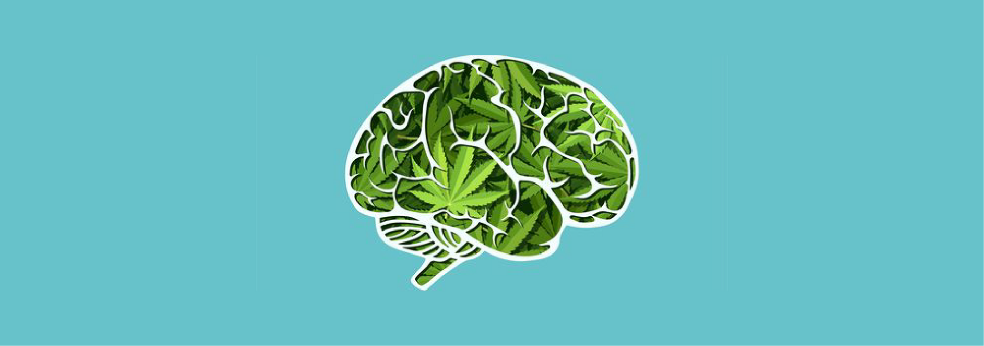 How Does CBD Affect the Brain