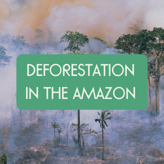 How to Help the Amazon Rainforest