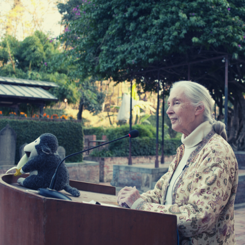 Jane Goodall speaking at an event