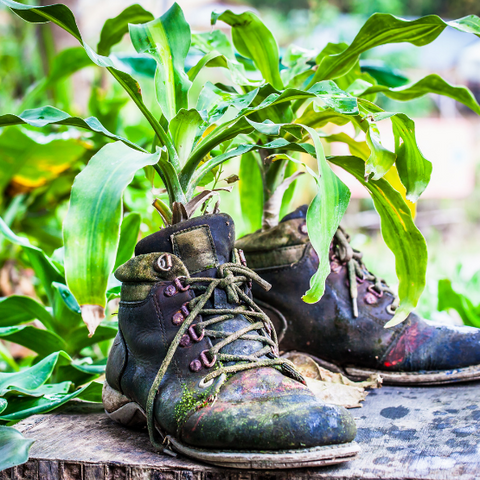 Old boots with plants growing out of them