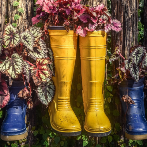 Rainboots filled with plants